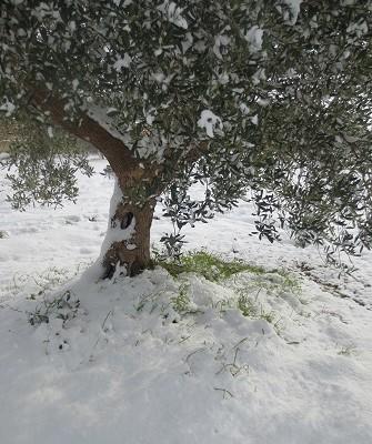 snö 12